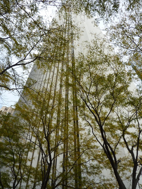 Aon Center Trees