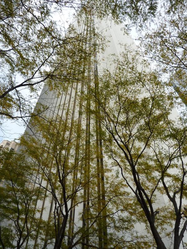Aon Center Trees